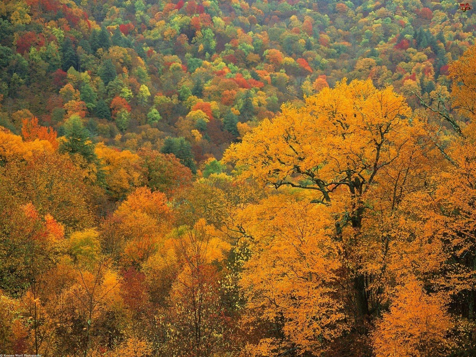 Drzewa, Jesienne, Kolorowe