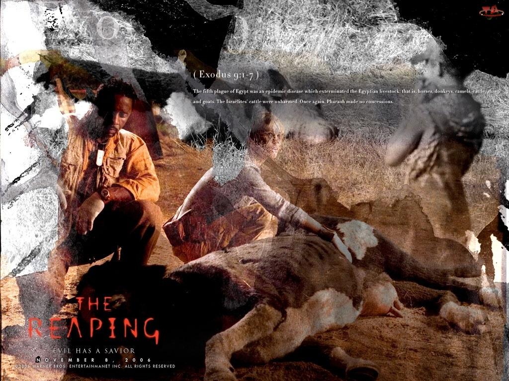 Reaping, krowa, Hilary Swank, Idris Elba
