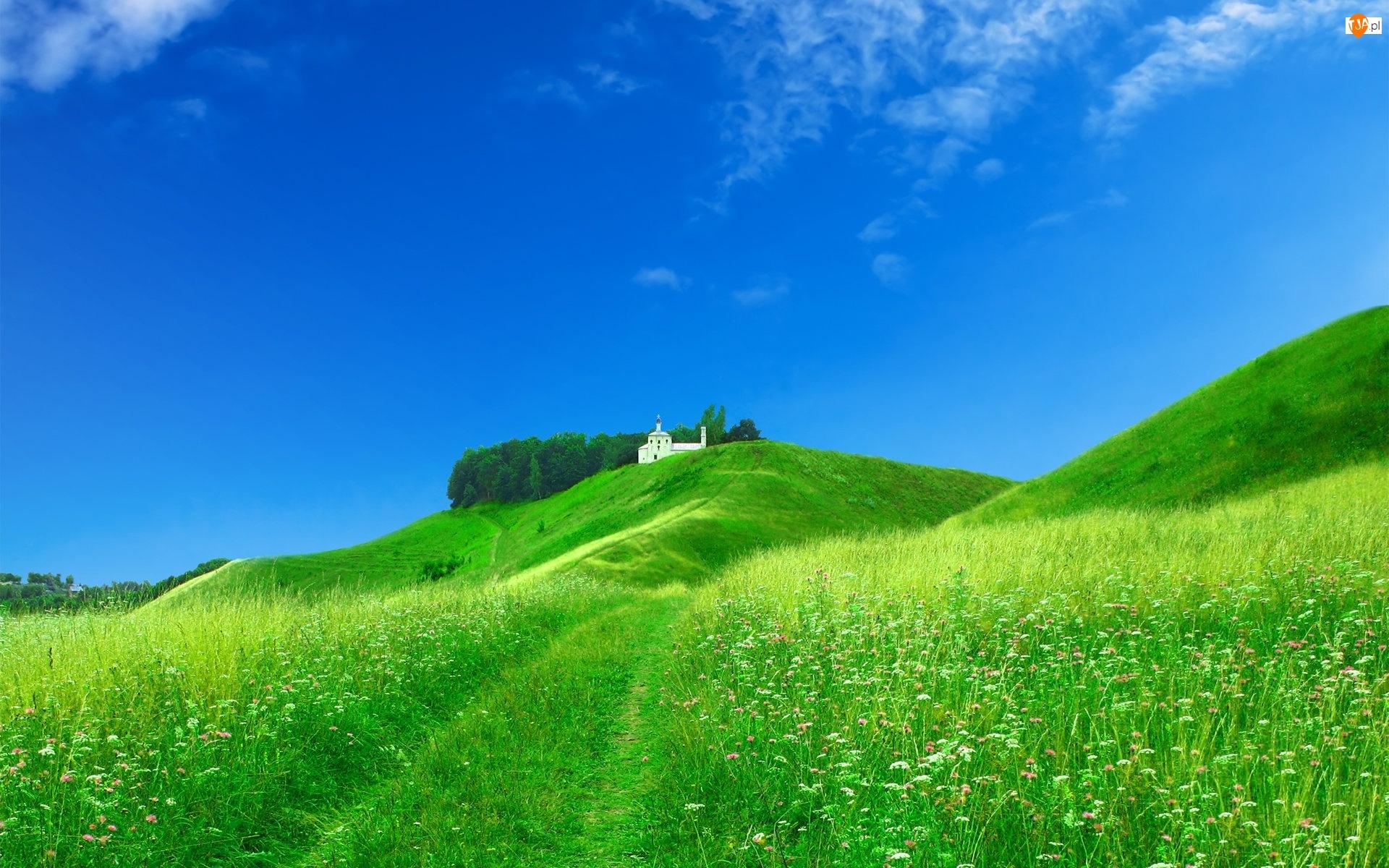 Pole, Domek, Zielona, Wzgórze, Trawa, Biały