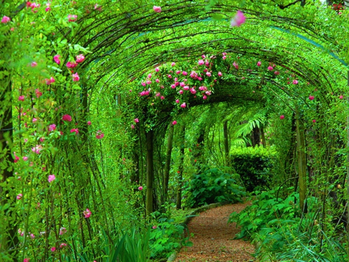 Rośliny, Ogród, Tunel