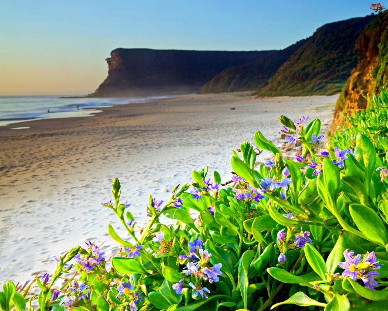 Klif, Plaża, Kwiaty
