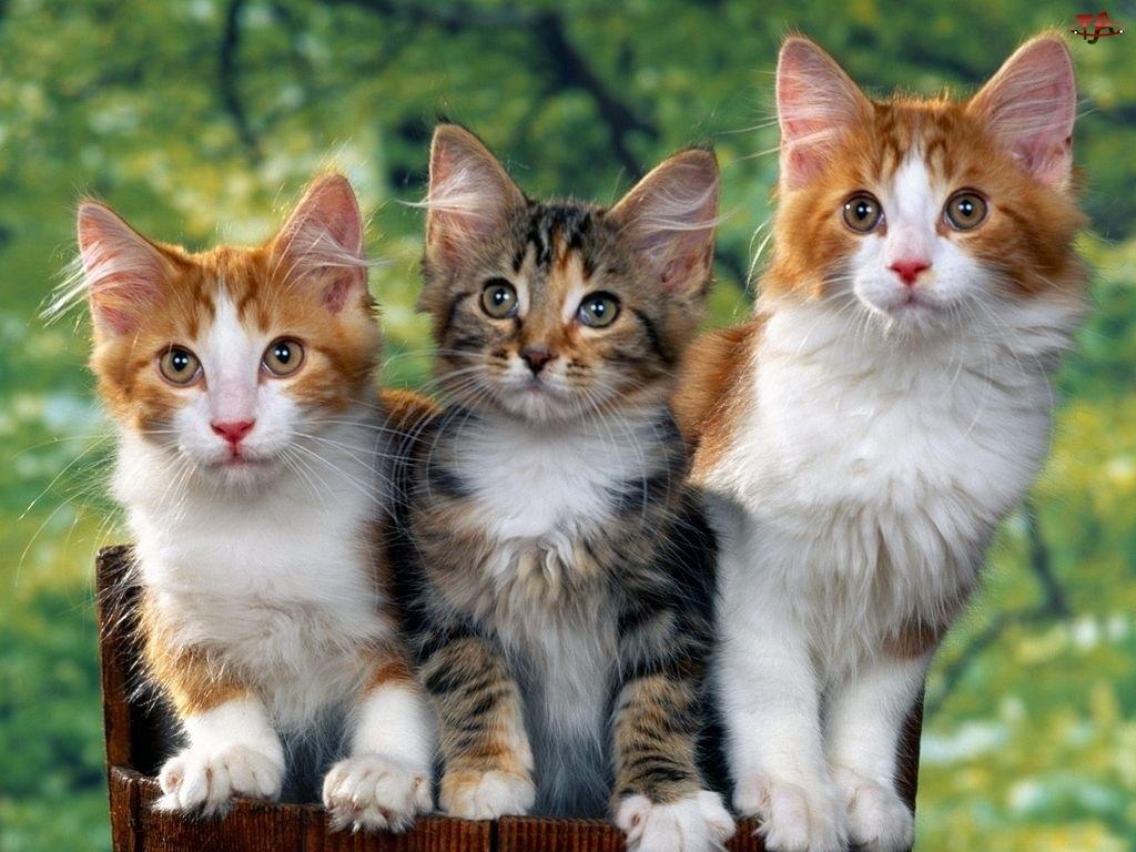 Trzy, Koty