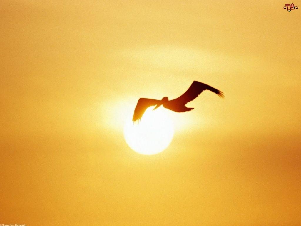 Ptak, Zachód Słońca