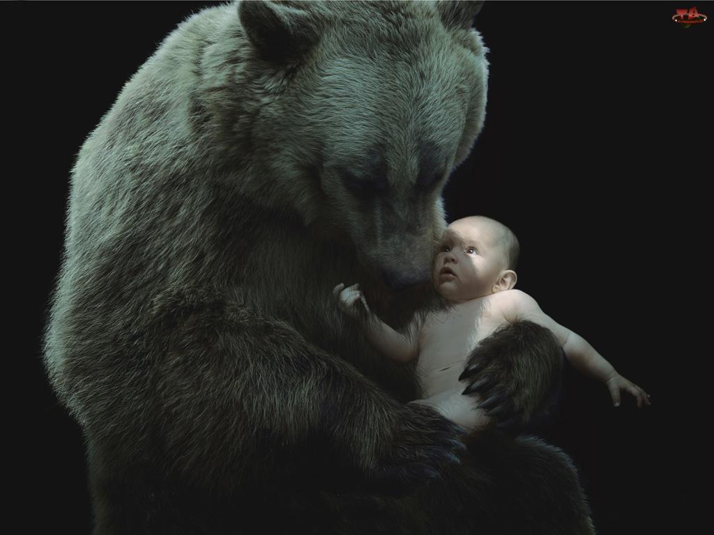 Niedźwiedź, Dziecko