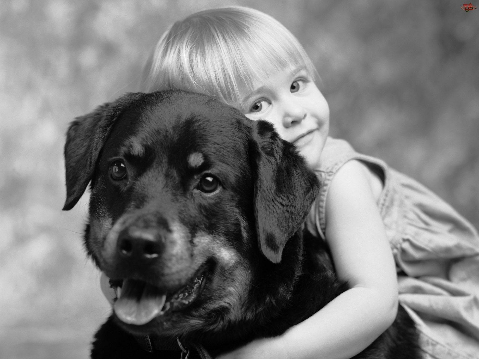 Fotografia, Dziecko, Pies