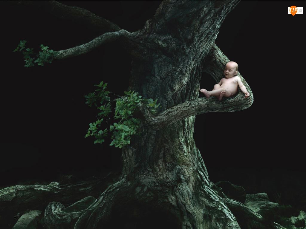Noc, Dziecko, Drzewo