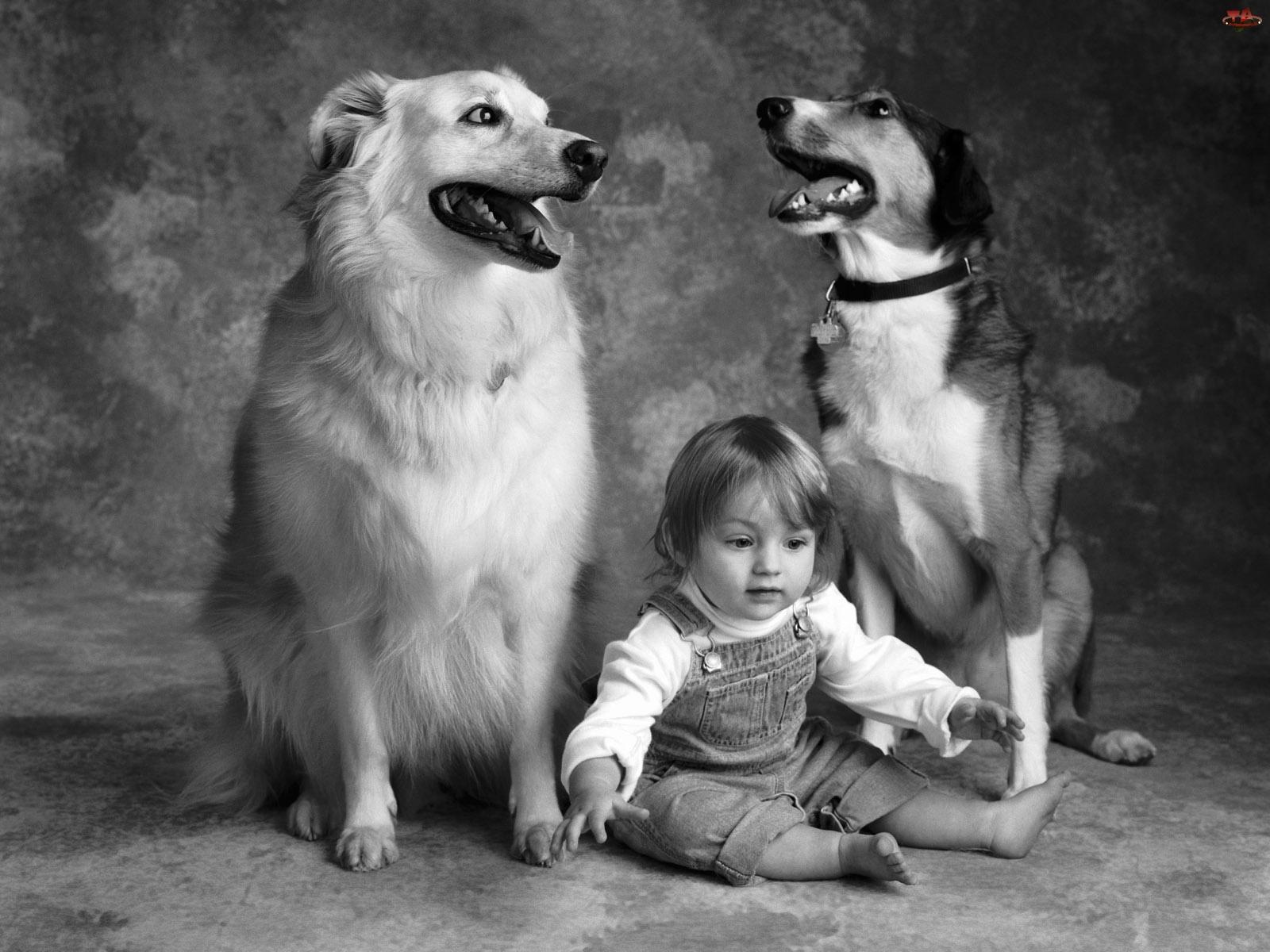 Fotografia, Psy, Dziecko