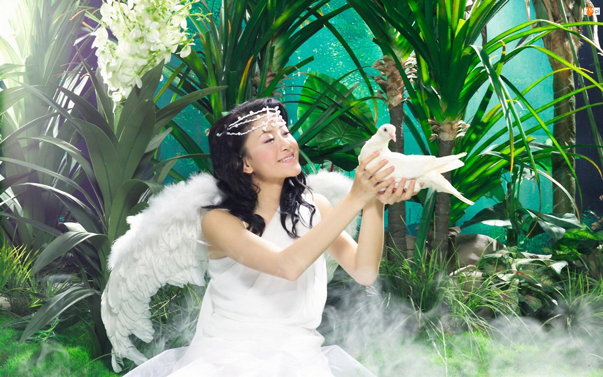 Gołąb, Kobieta, Anioł
