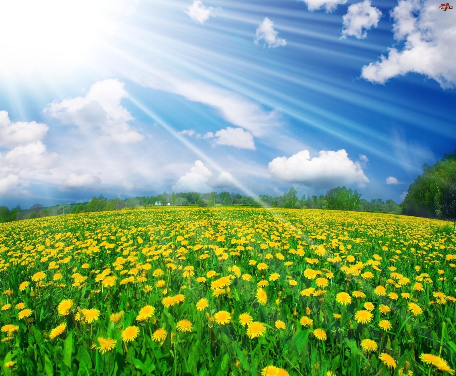 Niebo, Mlecze, Promienie, Łąka, Słoneczne