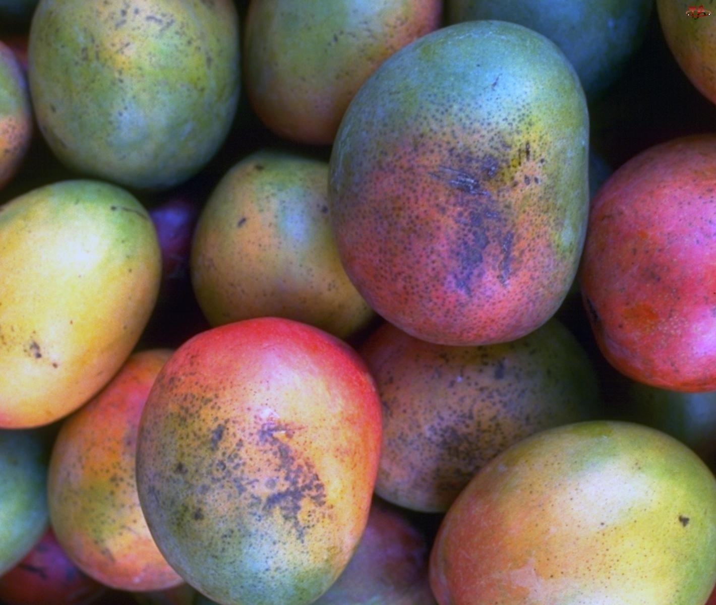 Owoce, Mango