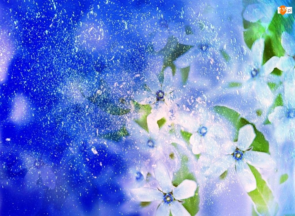 Tło, Kompozycja, Kwiatków, Białych, Niebieskie