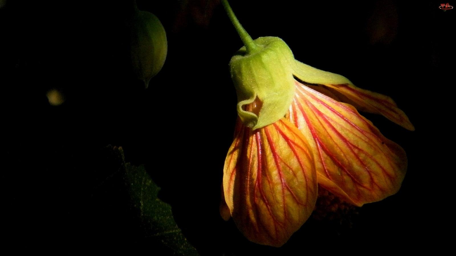 Pomarańczowy, Kwiat