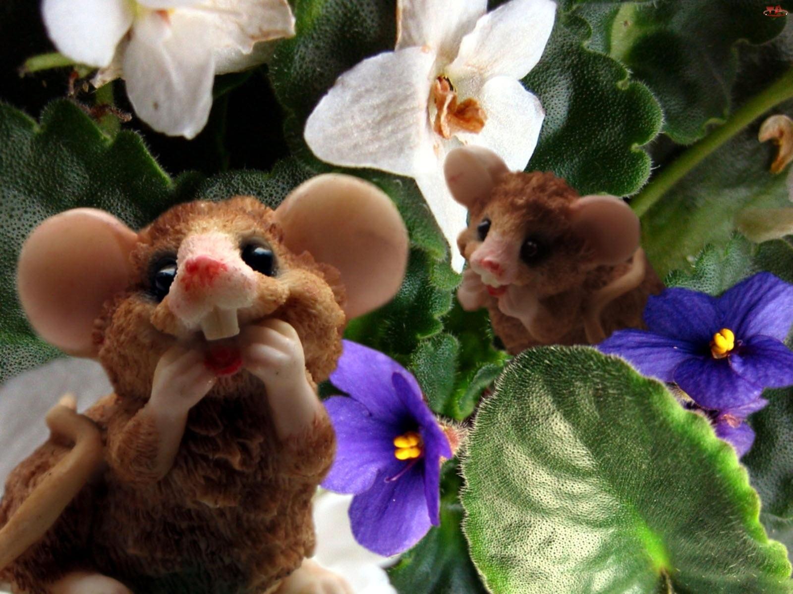 Myszki, Kwiaty