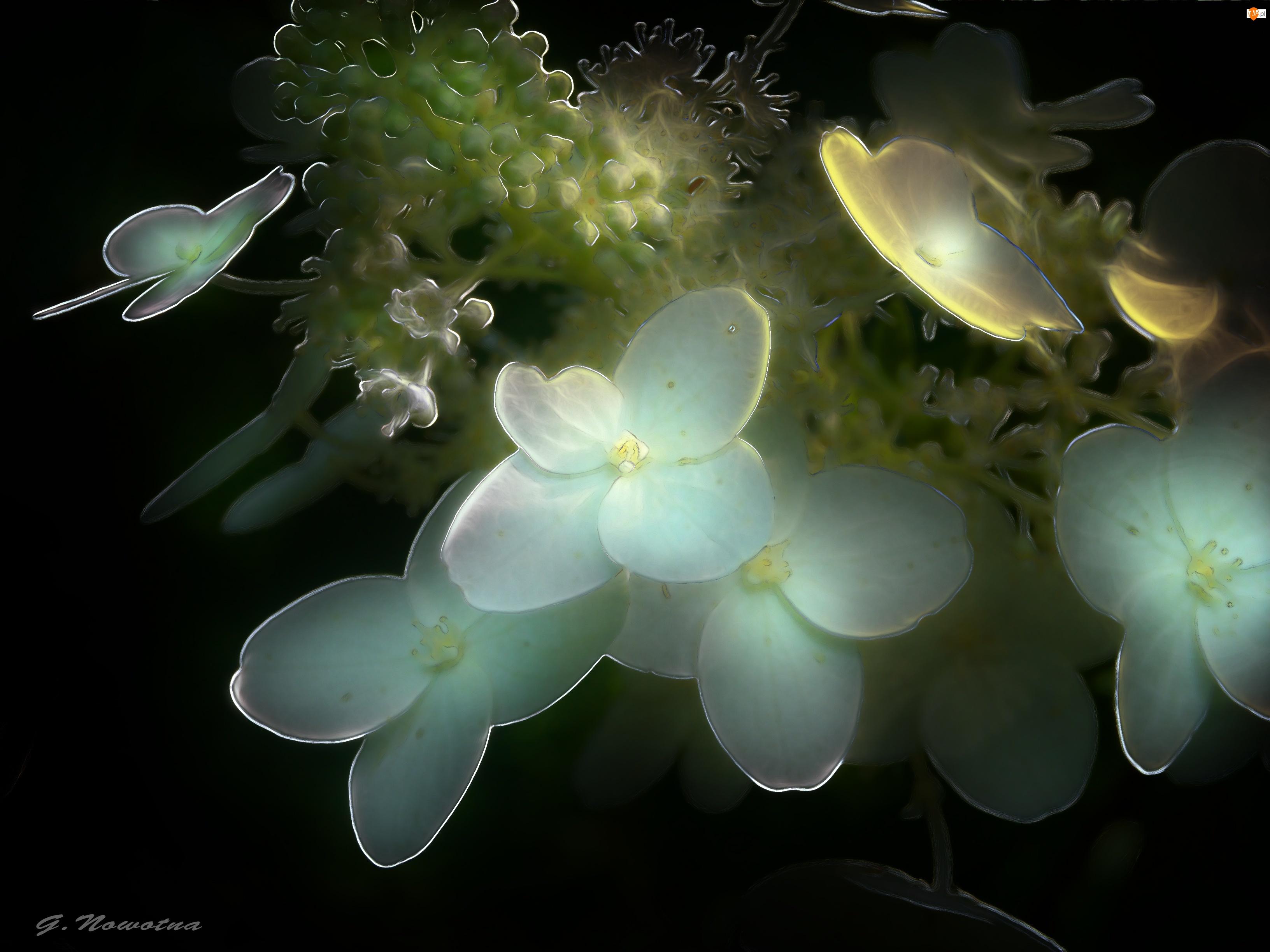 Kwiaty, Fractalius