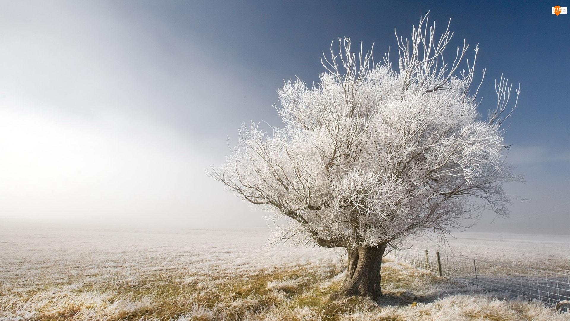 Trawa, Drzewo, Oszroniona