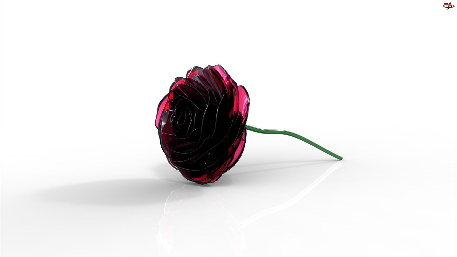 Róża, 3D