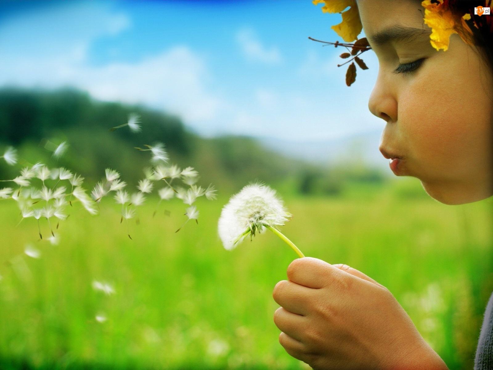 Dziewczynka, Mleczu, Wianek, Kwiat