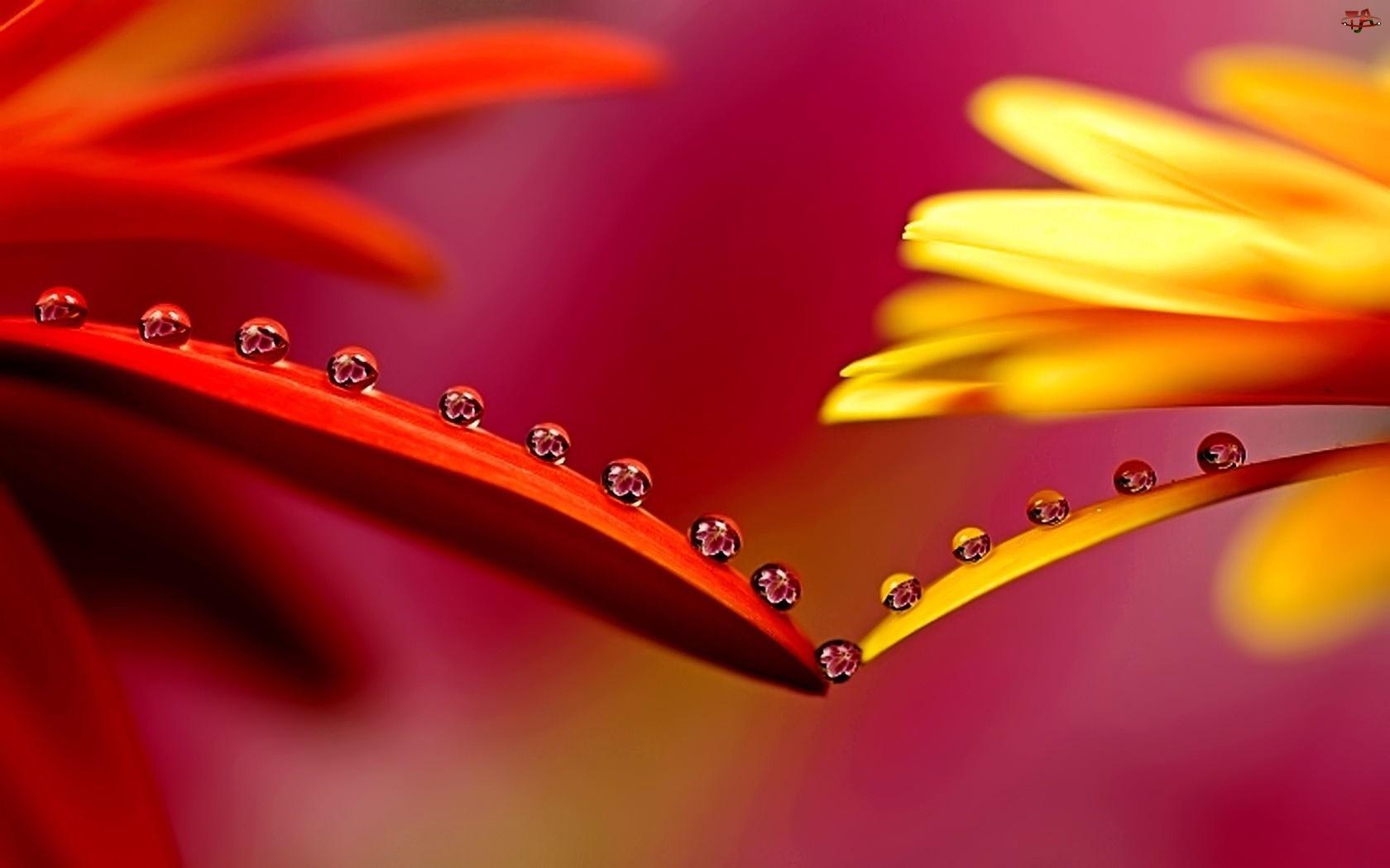Wody, Czerwony, Kwiat, Żółty, Krople