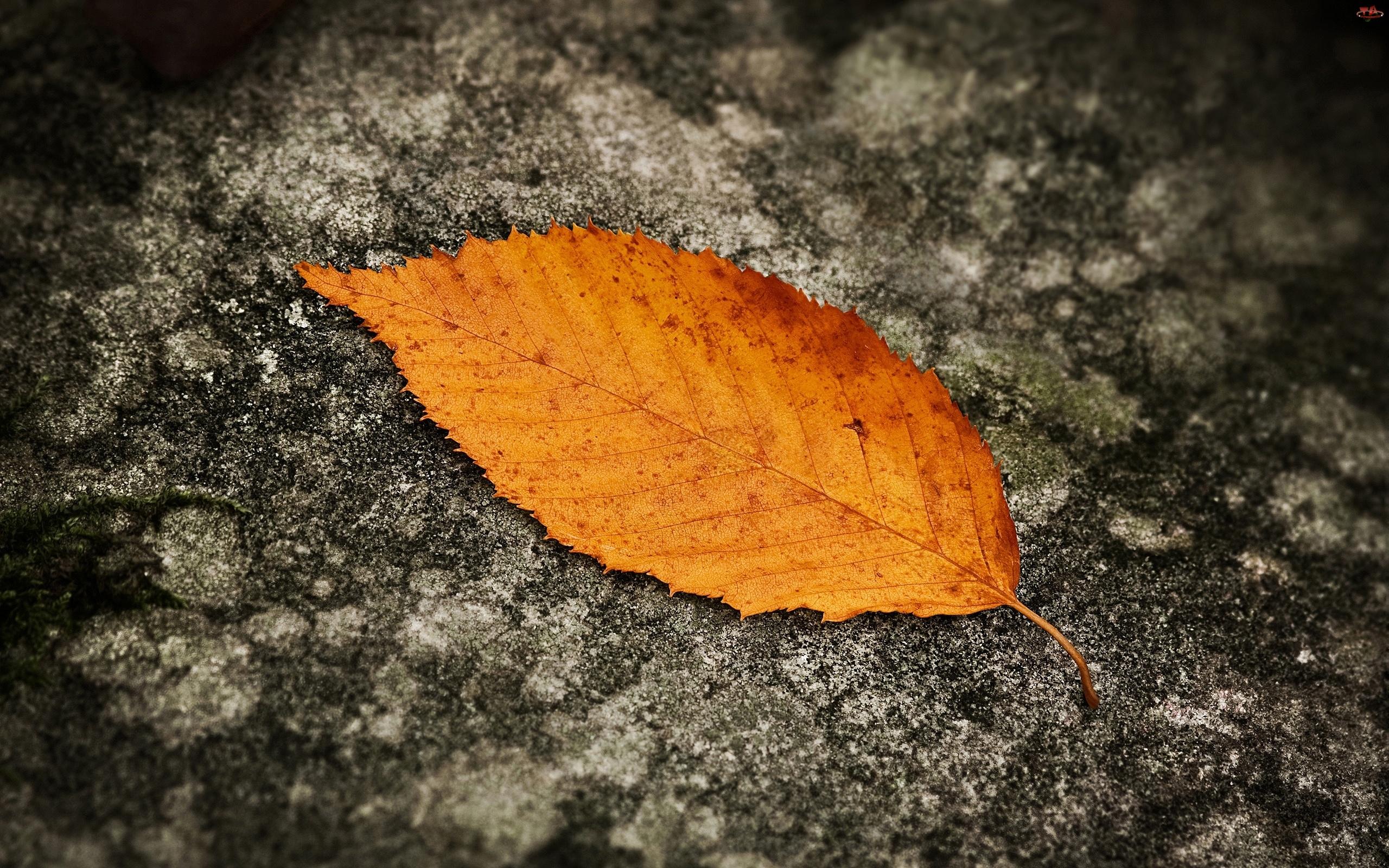 Liść, Żółty, Jesienny