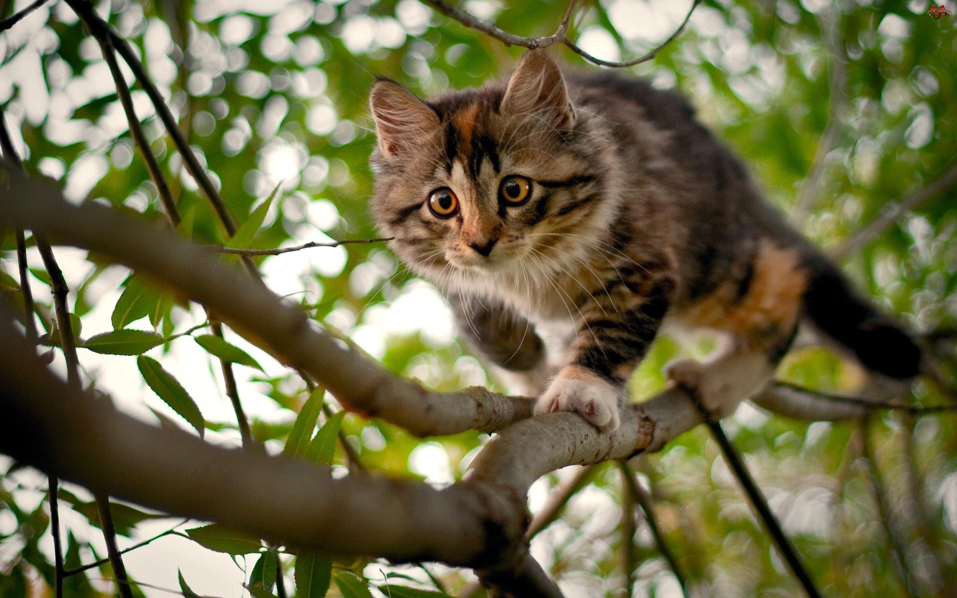 Gałęzie, Kotek, Drzewo