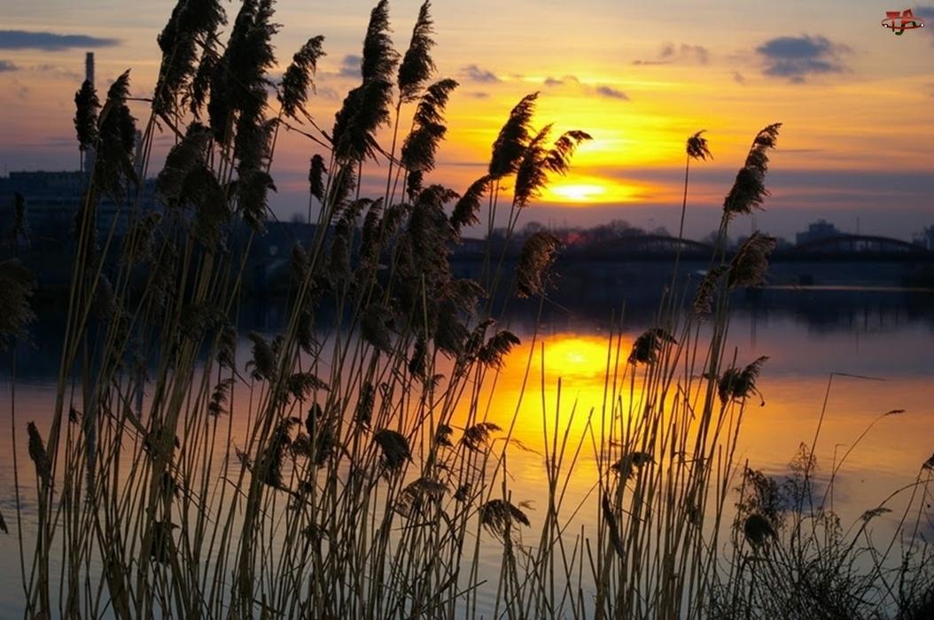 Jezioro, Trzcina, Zachód, Słońca