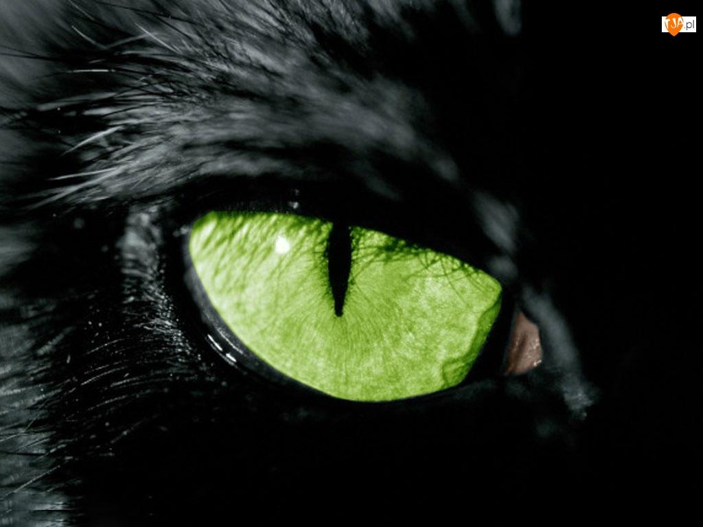 Czarny, Oko, Kot, Zielone