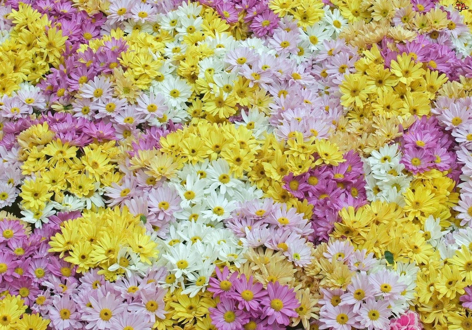 Kompozycja, Kolorowe, Kwiatki