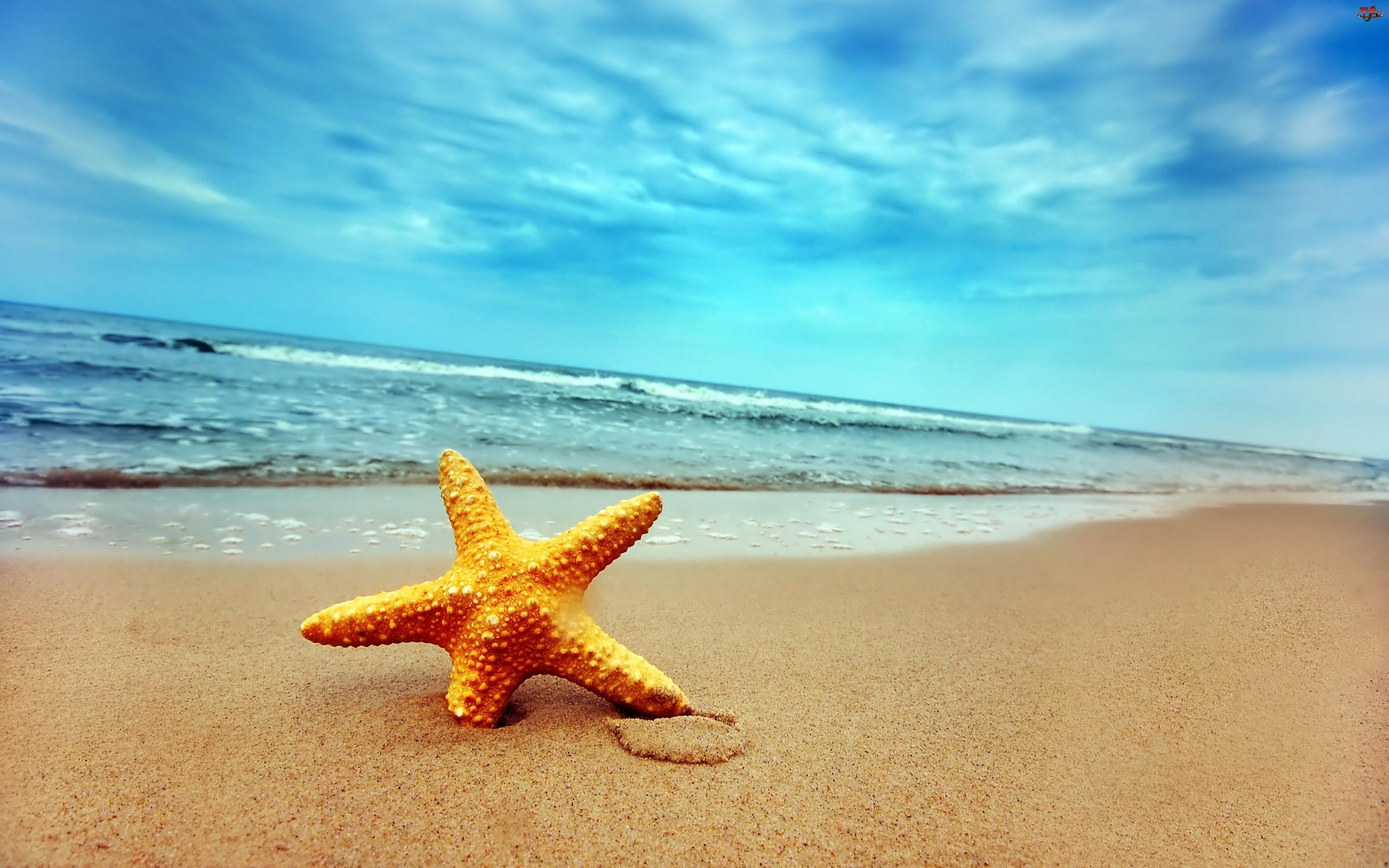 Plaża, Pomarańczowa, Gwiazda
