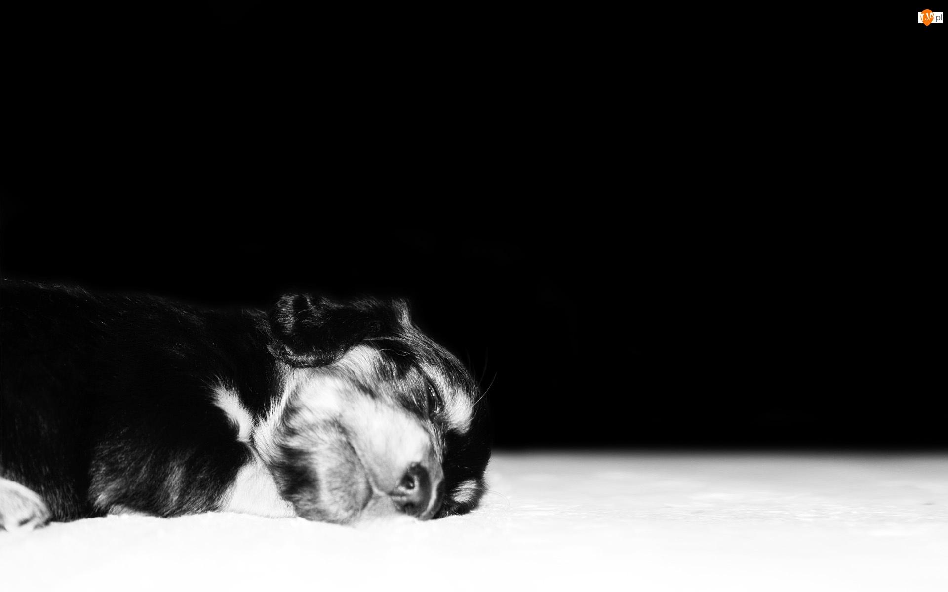 Śpiący, Piesek