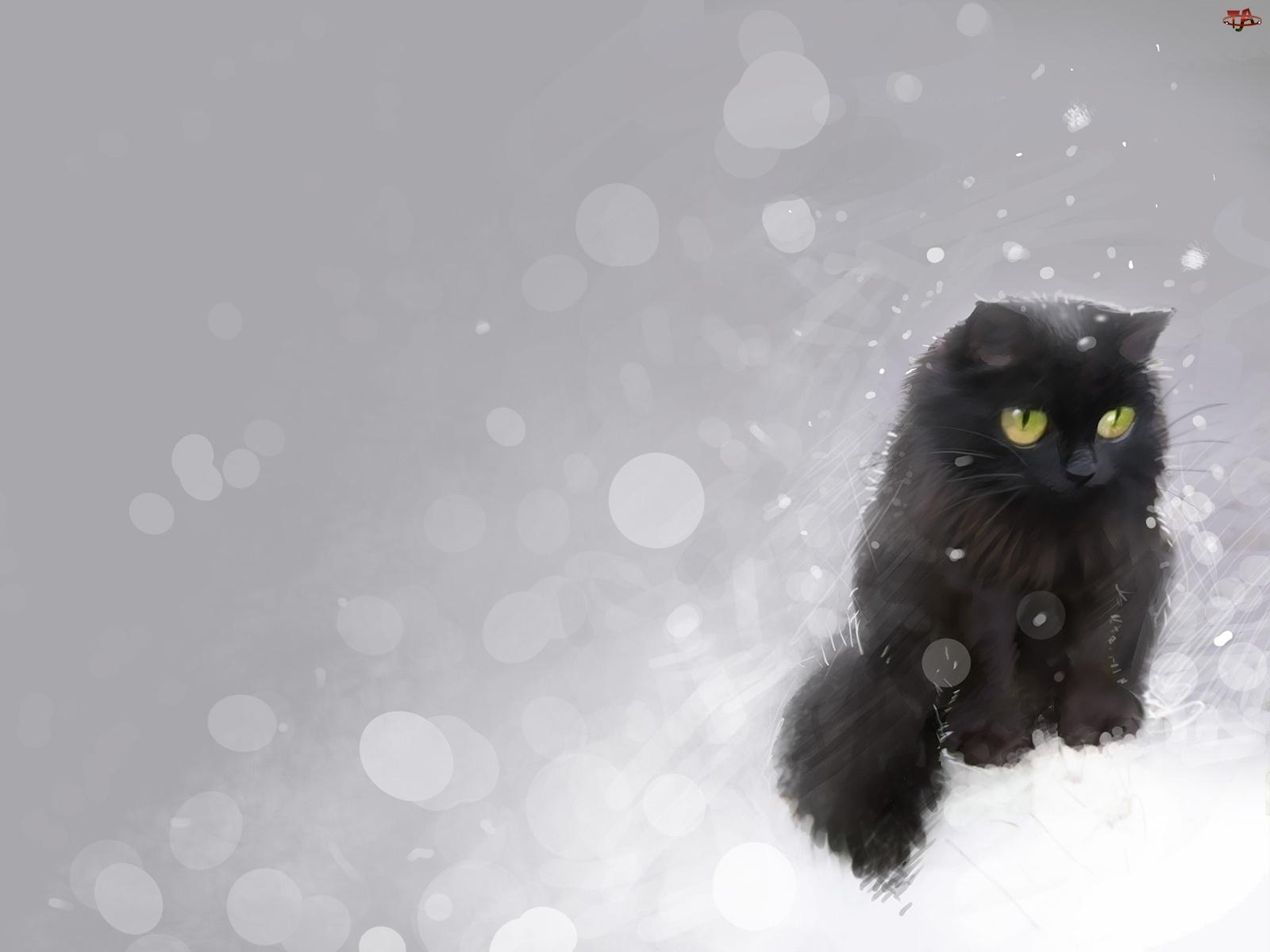 śnieg Czarny Kot