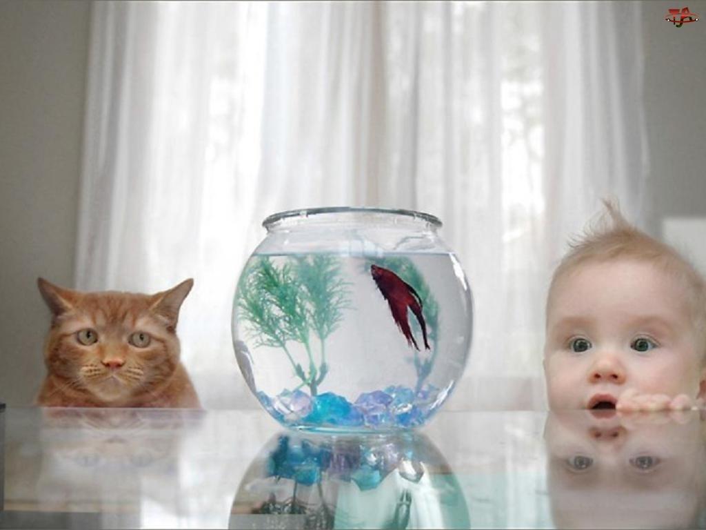 Kot, Dziecko, Rybka