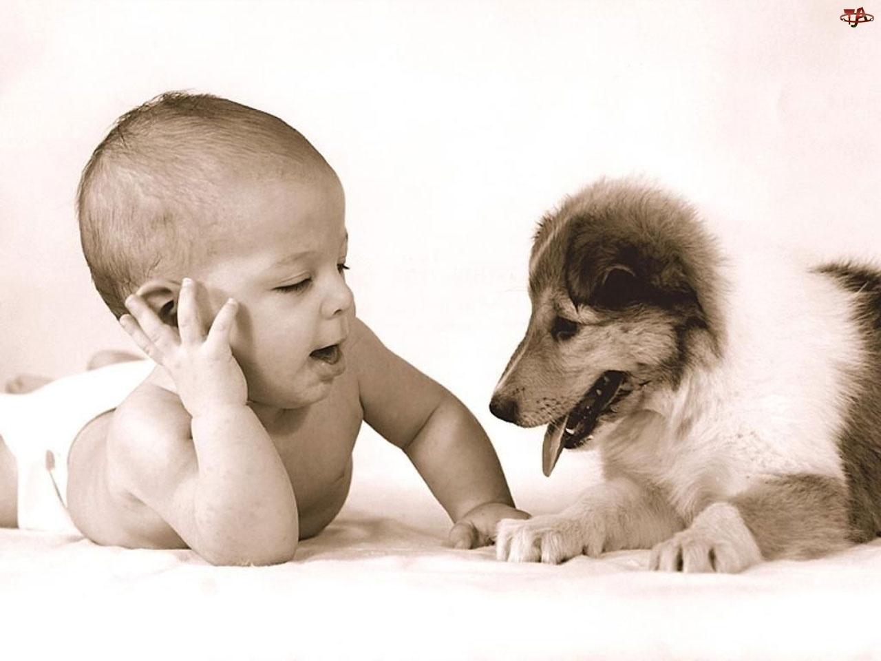 Przyjaciele, Dziecko, Szczeniak