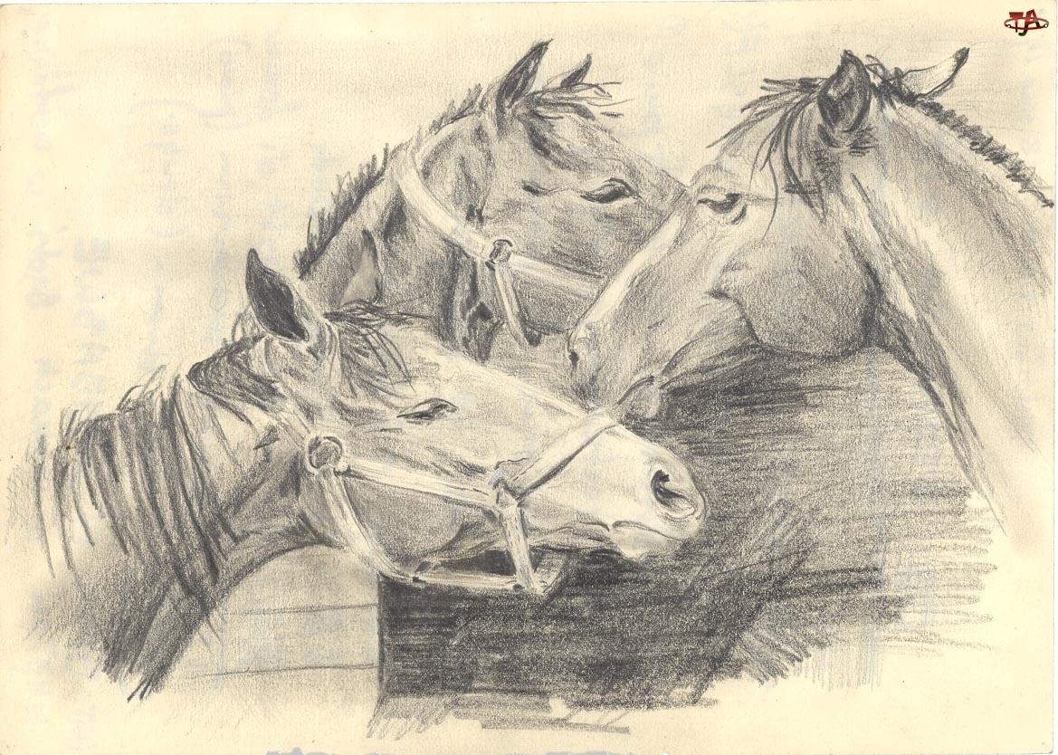 Konie, Szkic