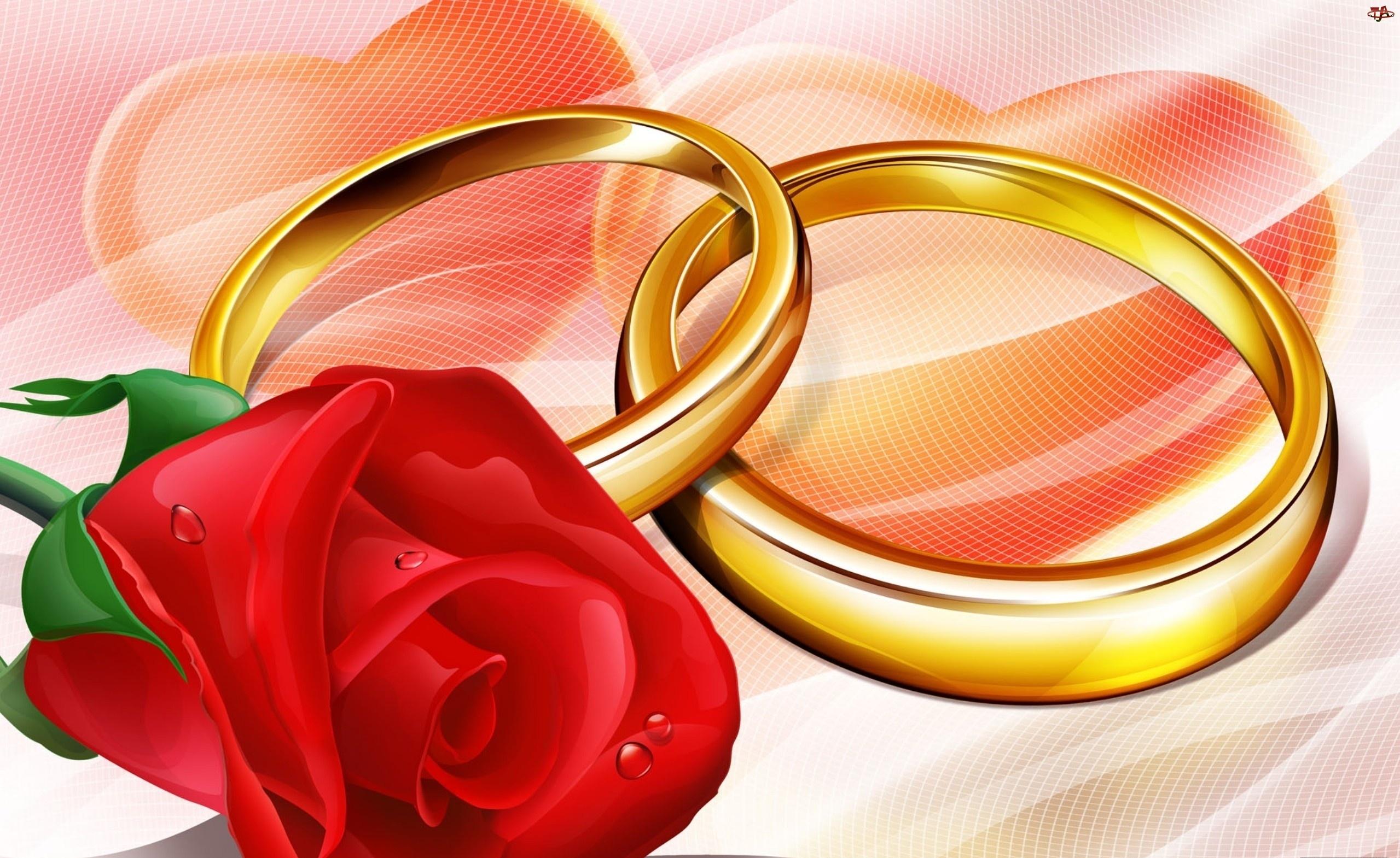 Róża, Obrączki, Czerwona, Dwie