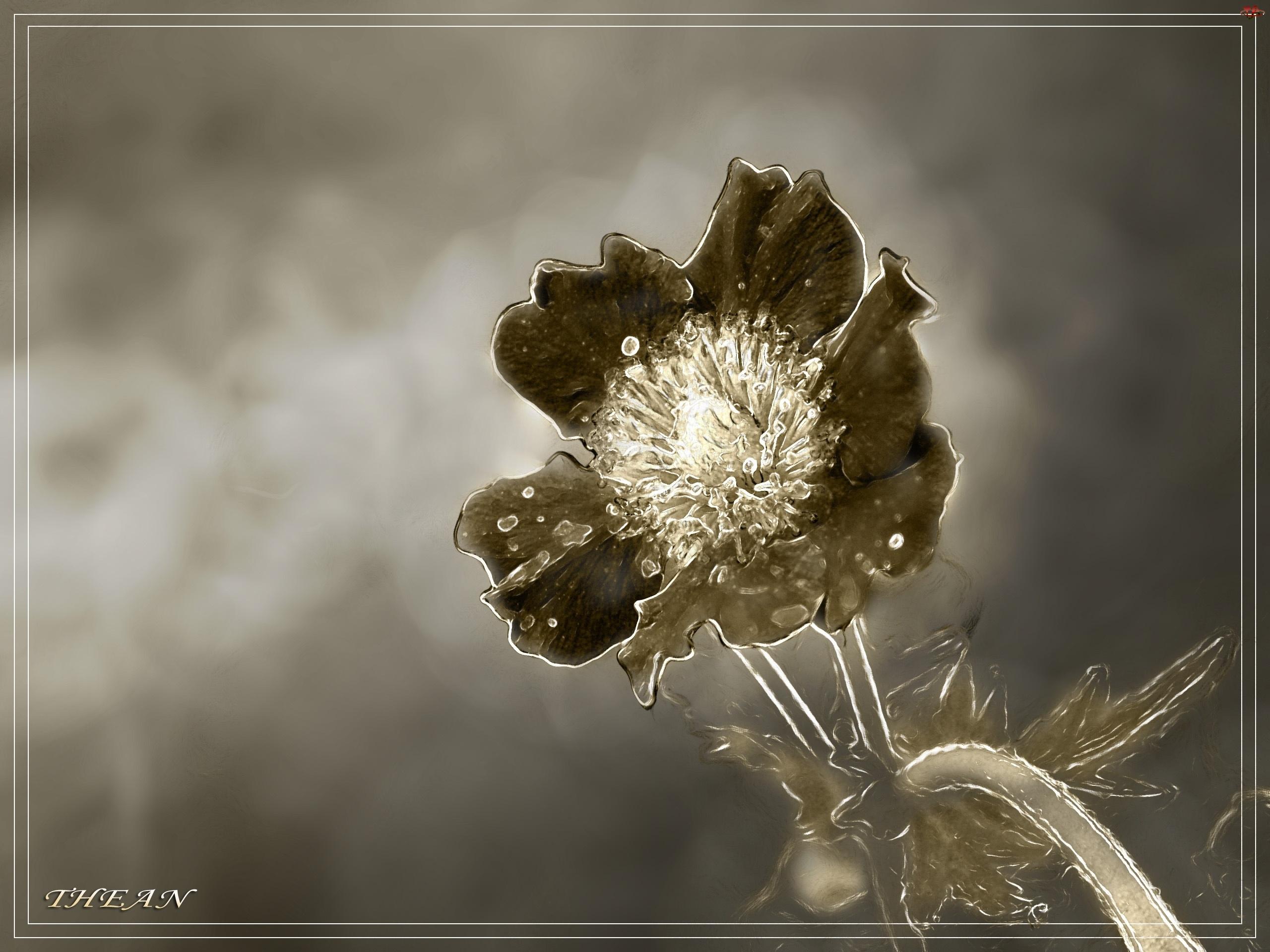 Kwiatek, Sepia