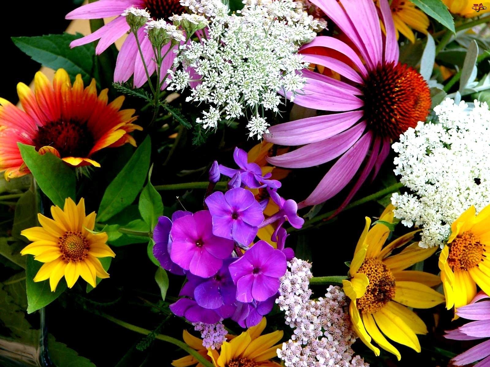 Gatunki, Kwiaty, Różne
