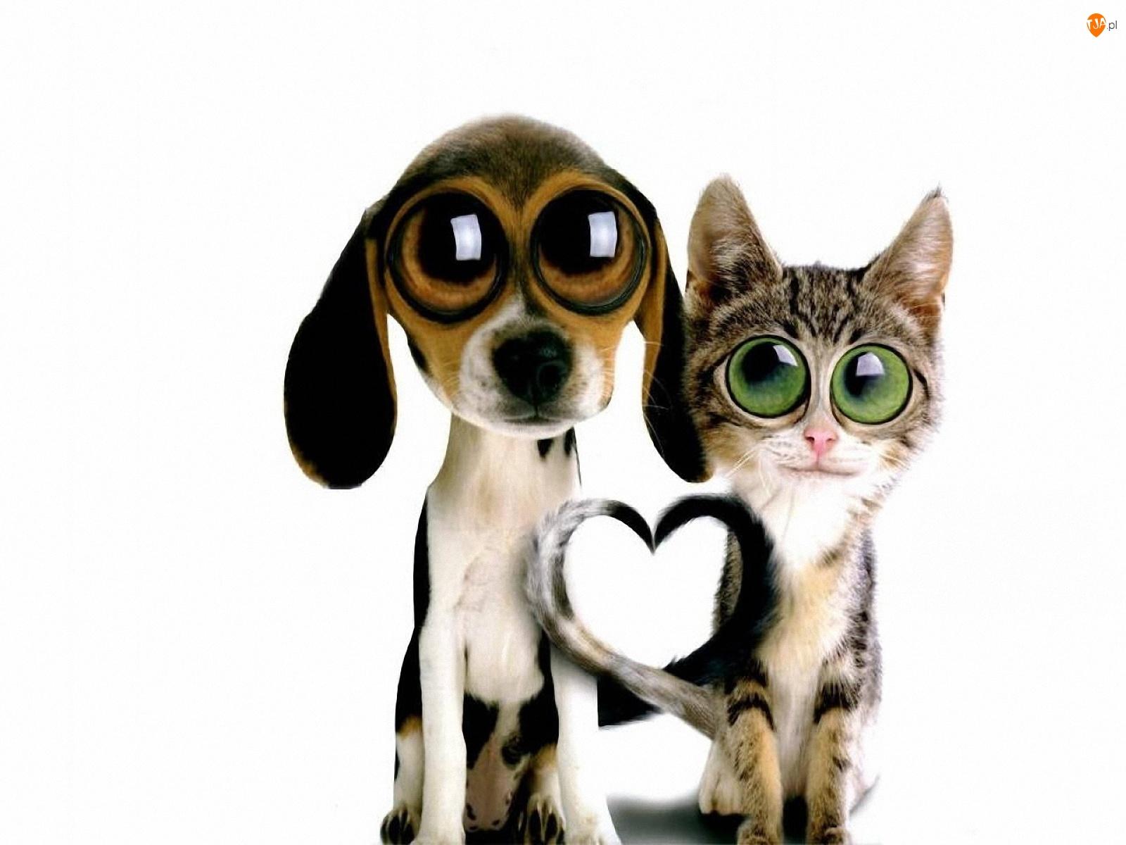 Kot, Oczy, Pies, Duże