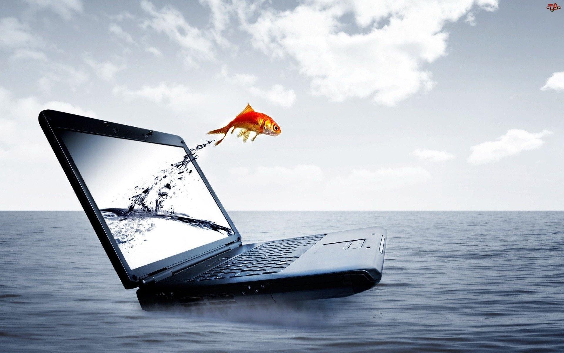 Morze, Laptop, Ryba