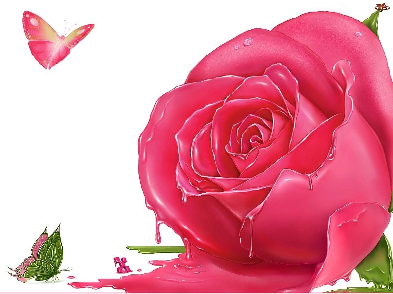Topniejąca, Motylki, Różowa, Róża