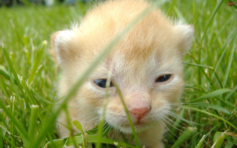 Trawa, Mały, Kotek