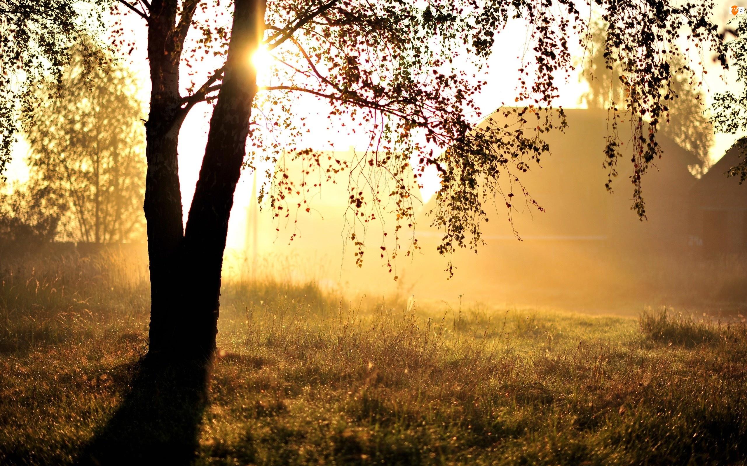 Drzewo, Trawa, Liście, Gałęzie