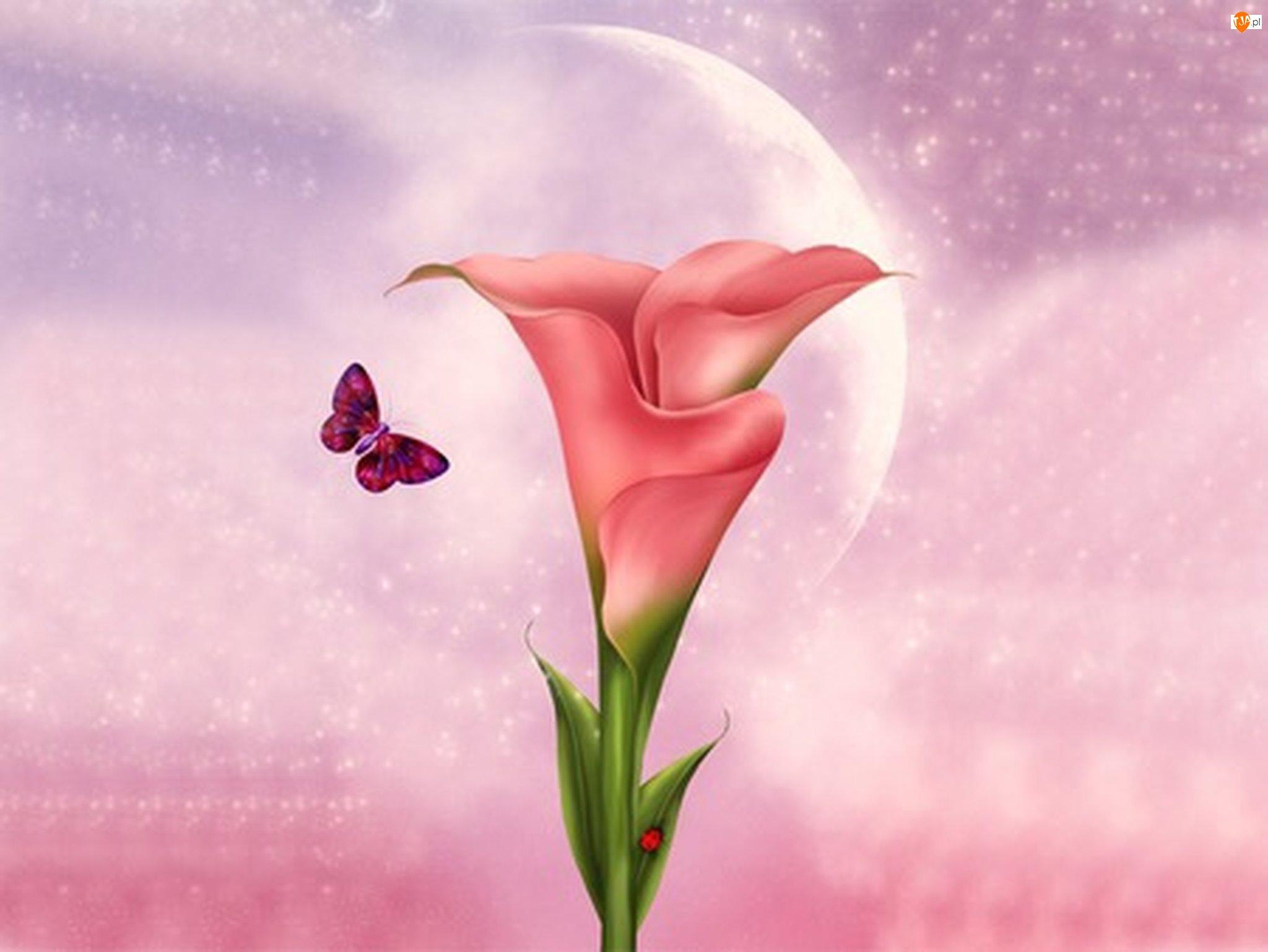 Motyl, Kwiat, Kalia