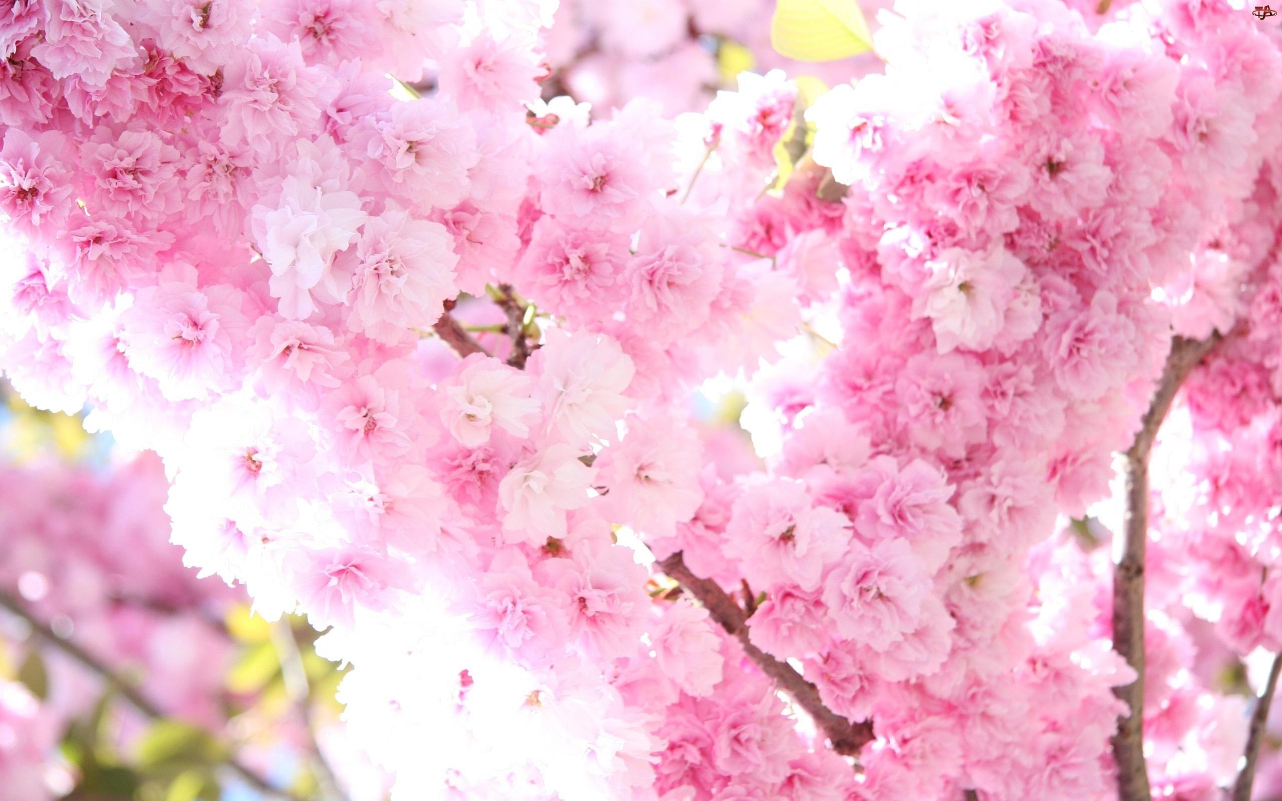 Kwitnące, Kwiatki