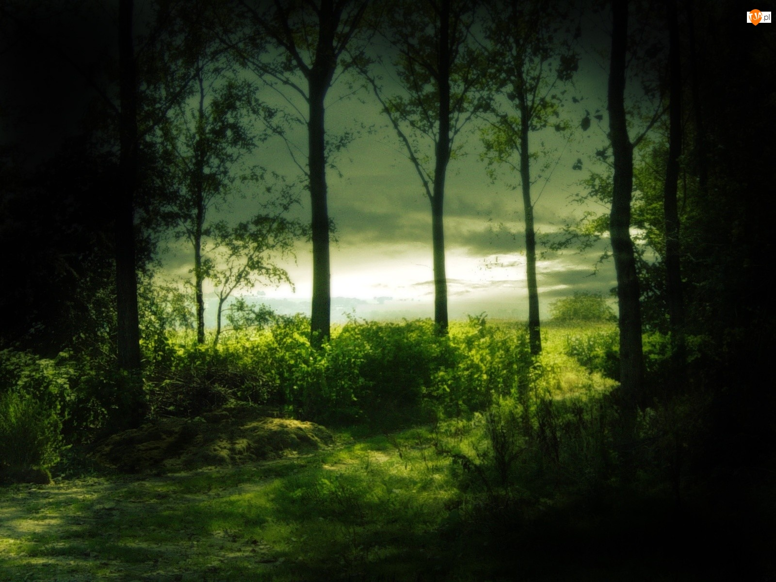 Las, Drzewa