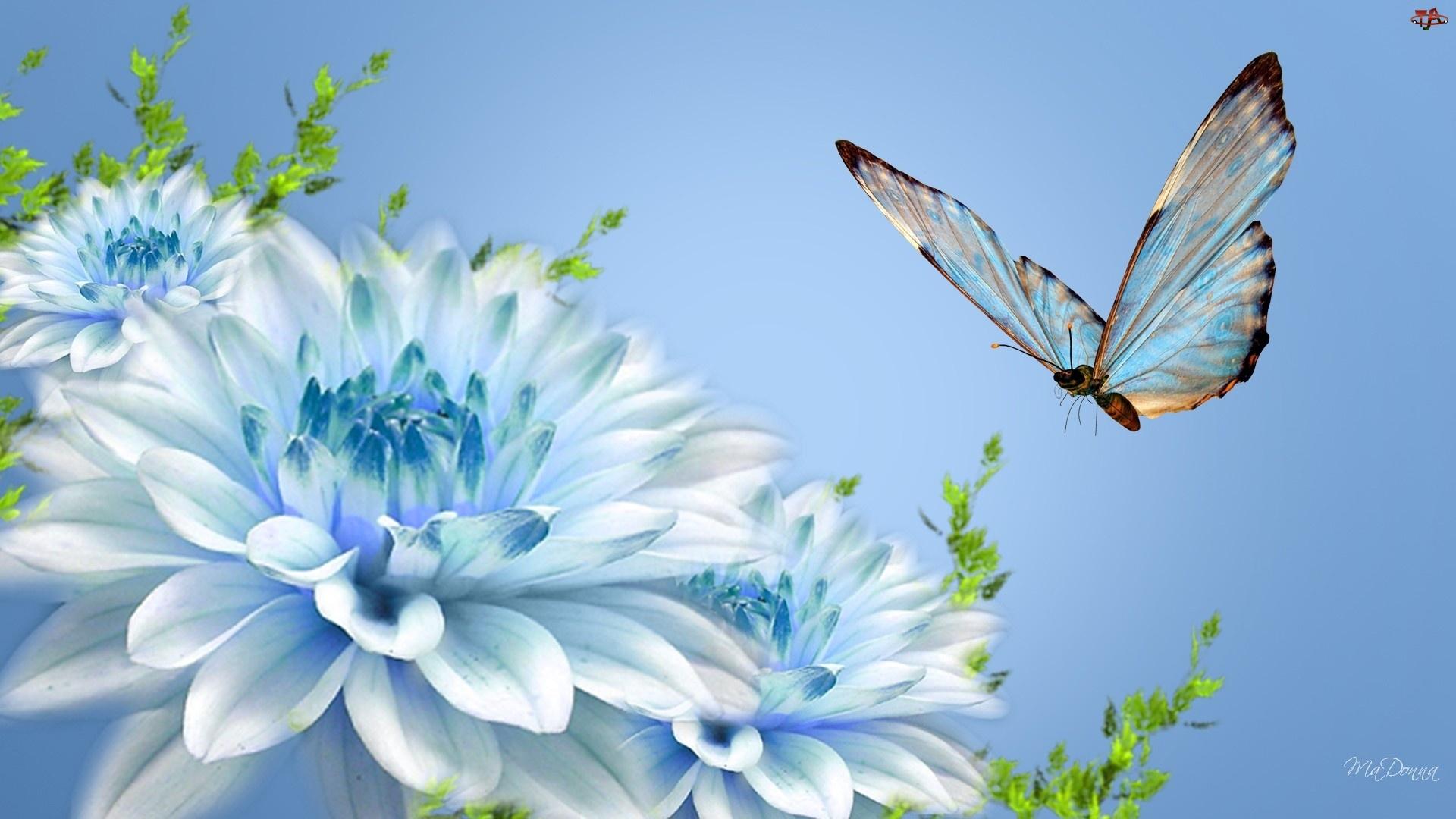 Motyl, Kwiaty, Niebieski