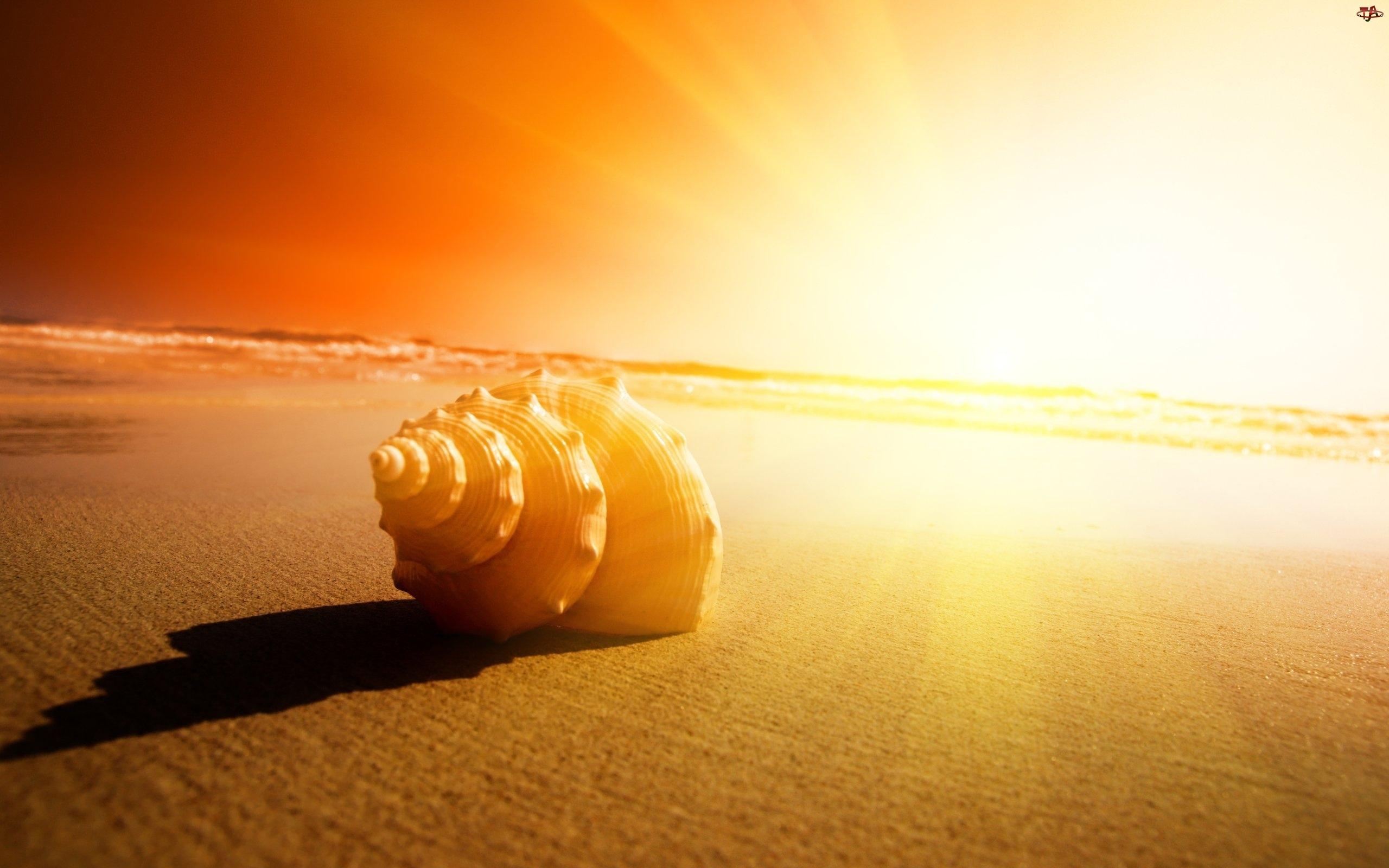 Muszla, Słońca, Plaża, Zachód