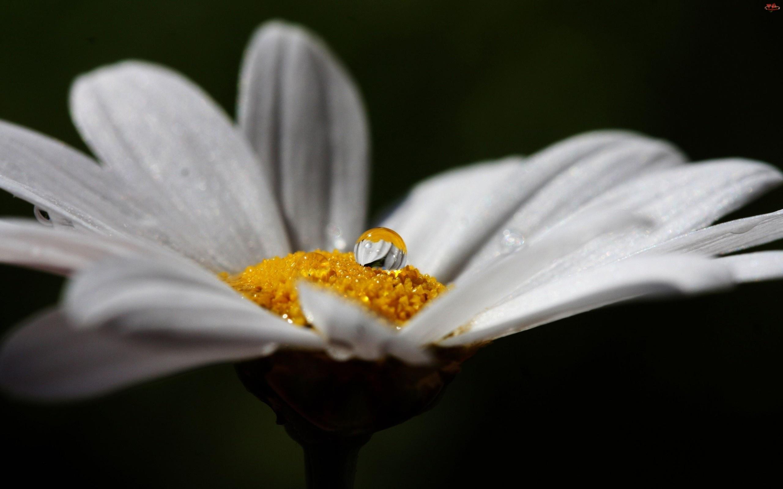 Wody, Kwiatek, Kropla