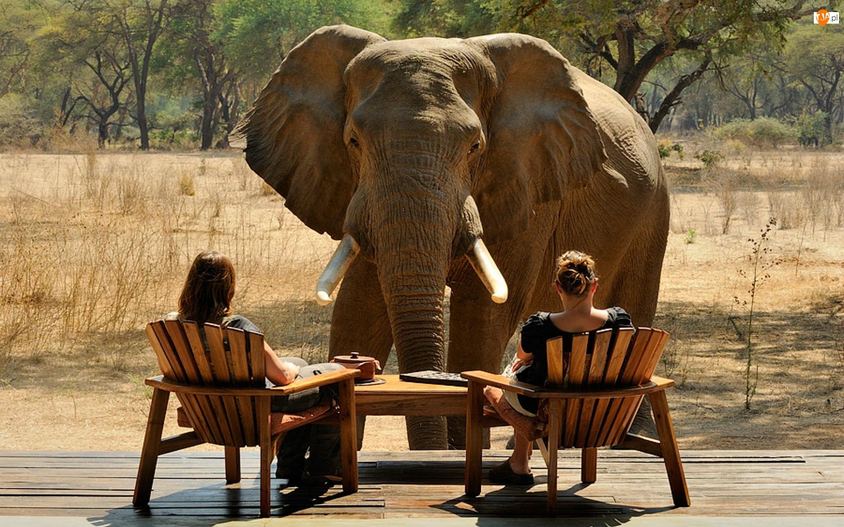 Słoń, Kobiety, Sawanna