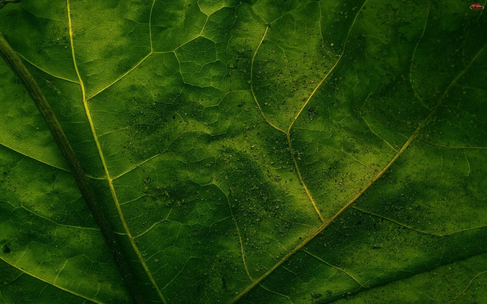 Liścia, Faktura, Zielonego