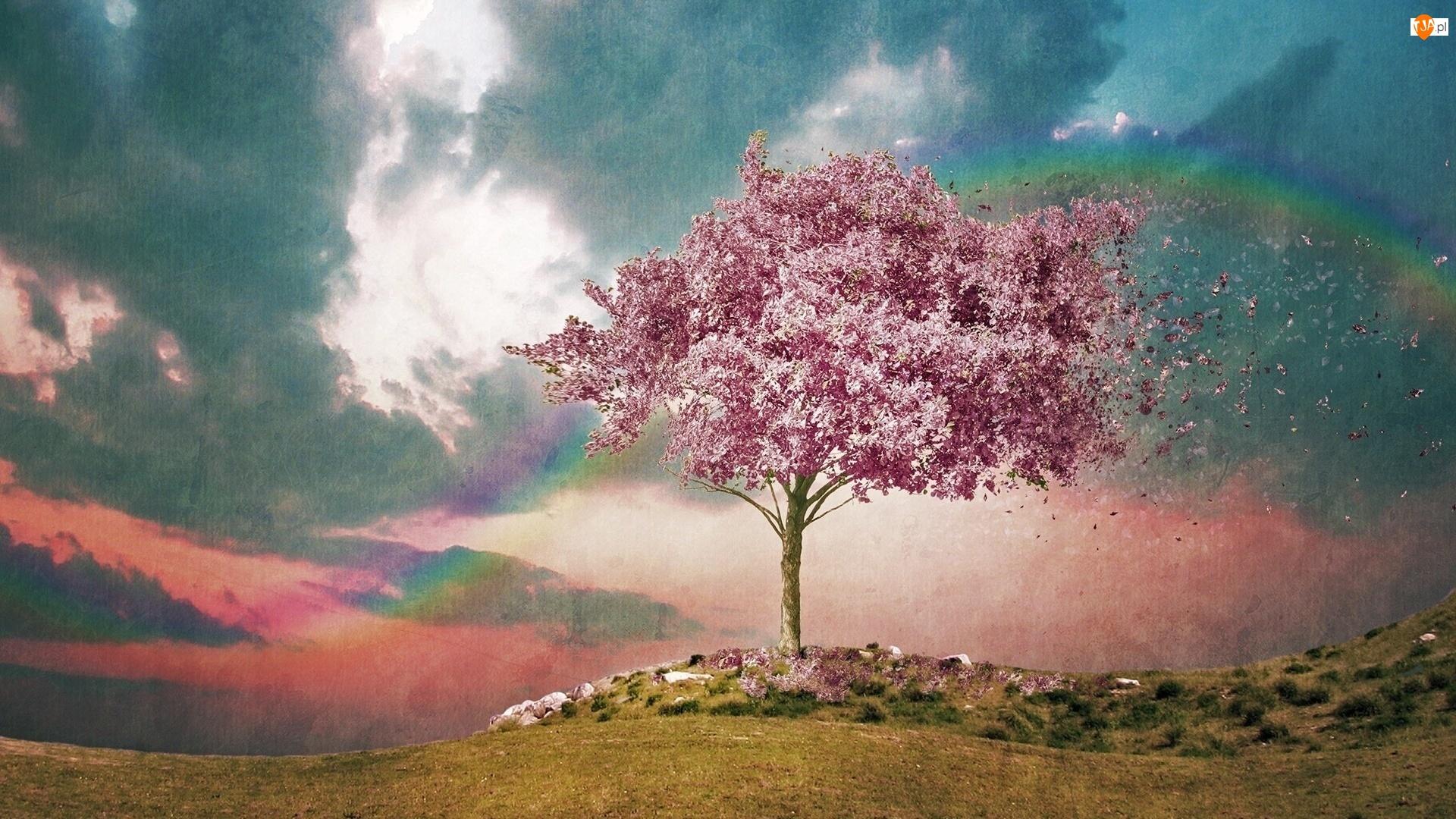 Drzewo, Tęcza